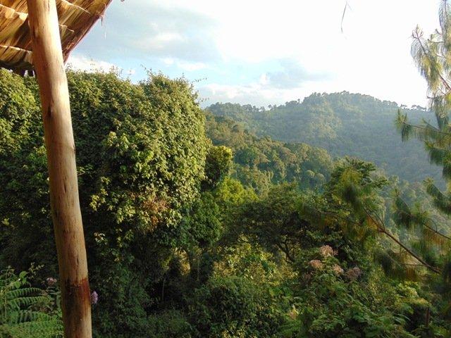 Gorilla-Trekking-Safari-in-Ruhija-Area-of-Bwindi-Forest-from-Kabale-or-Kisoro